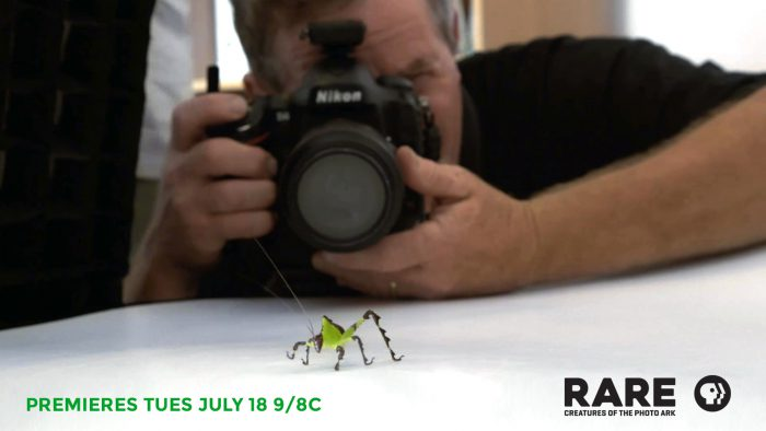 "[caption id=""attachment_46748"" align=""alignnone"" width=""1920""][/caption] Discover the diversity, beauty and value of thousands of species at risk of extinction, and travel the globe with renowned photographer and Photo Ark founder Joel Sartore in his quest to save them, premiering on PBS: Tuesday, July 18th, 9/8 CST. RARE: Creatures of the Photo Ark"