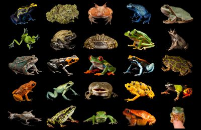Photo: Frogs and Toads Montage