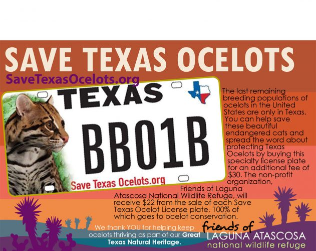 One of our favorite ocelot images is featured on a new Texas conservation themed license plate.
