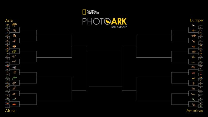 March is here again and so it is time for the second year of the Photo Ark Madness tournament!