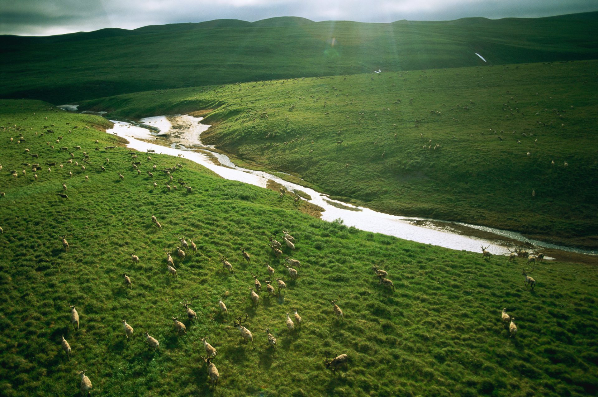Photo: Vast and unexplored, the Utukok Uplands are the summer calving grounds for the western arctic caribou herd.