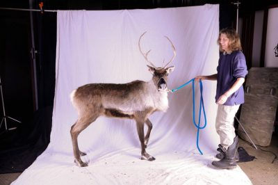 A captive reindeer (Rangifer tarandus) with its handler at the University of Alaska in Fairbanks.