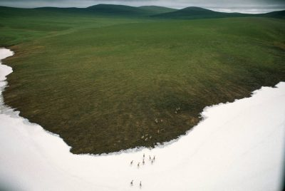 Photo: The western Arctic caribou herd heads east and inland from their calving grounds to their summer range in the Brooks Mountains on the North Slope of Alaska.