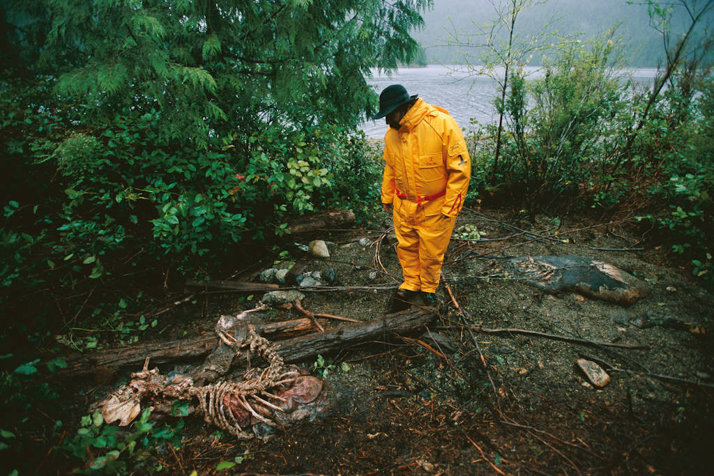 Photo: A biologist looks down at the bones of a Steller sea lion in Vancouver Island's Clayoquot Sound (British Columbia, Canada.)