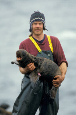 Biologists hold endangered (IUCN) and federally endangered Steller sea lion (Eumetopias jubatus) pups in Alaska.