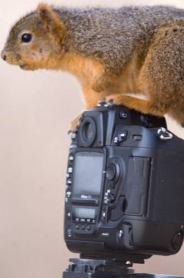 Photo: A squirrel explores a camera set up at Waveland farm near Lincoln, NE.