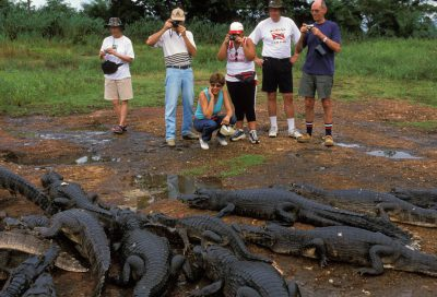 Photo: Tourists photograph spectacled caiman at Caiman Ranch in Brazil's Pantanal region.