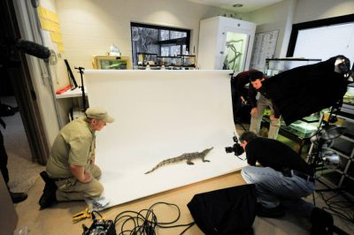 Joel Sartore films an American crocodile (Crocodylus acutus) (IUCN: Vulnerable, federally endangered) at the Omaha Zoo in Nebraska.