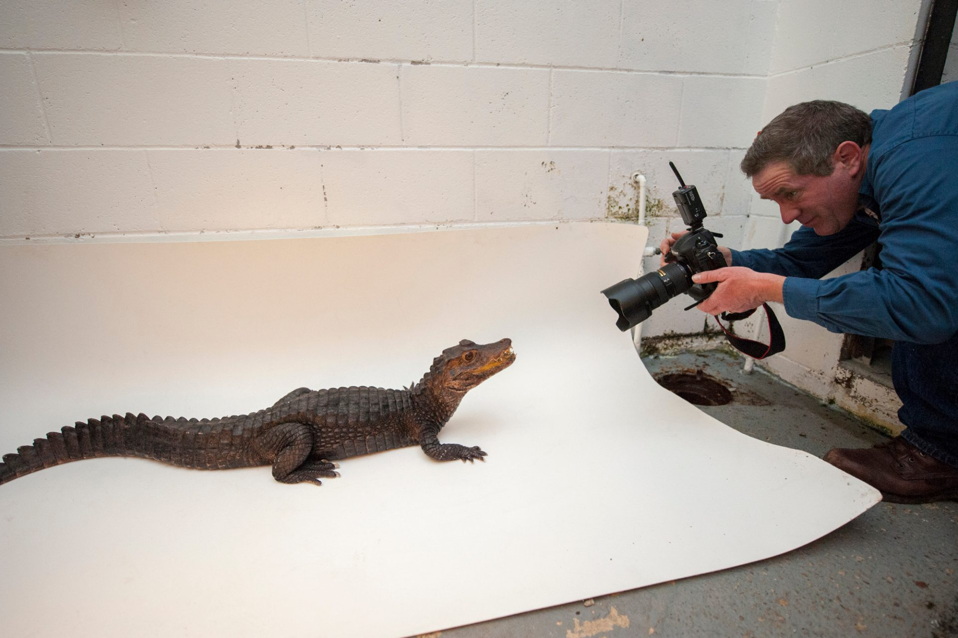 Joel carefully photographs dwarf caiman (Paleosuchus palpebrosus) at the Sunset Zoo.