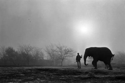 Photo: Trainers spend time with an elephant.