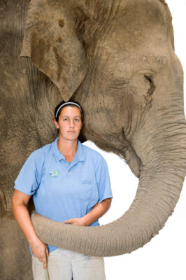 Picture of an endangered Asian elephant (Elephas maximus) with keeper.