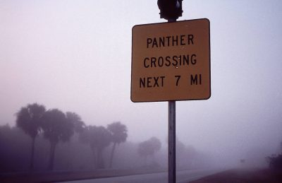 Photo: Panther crossing signs near the everglades warn motorists to use caution as they travel through the home of the endangered Florida panther and other species.