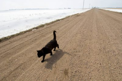 Photo: A black cat walks down a dirt road near Kearney, Nebraska.
