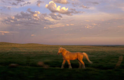 Photo: Horses at the Sandal Ranch near Howes, South Dakota.