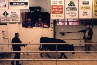Photo: A cattle auction in Cottonwood, California.