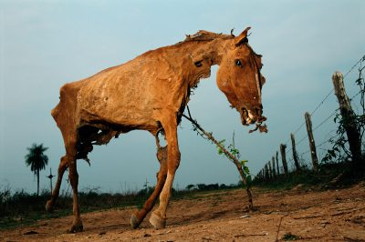 Photo: A decaying horse has been propped up by cowboys in the Pantanal.