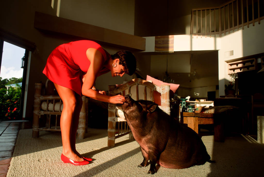 Photo: A woman with her pet pot-bellied pig in Naples, Florida.