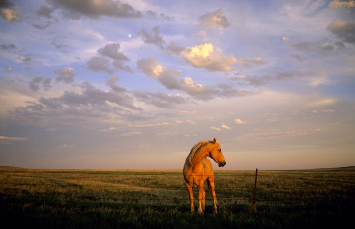 Photo: A horse stands by a barbed wire fence in the sunset light near Howes, South Dakota.