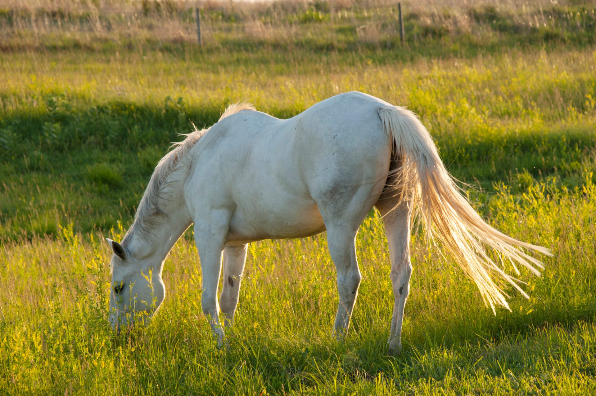 Photo: A horse grazes near Denton, Nebraska.