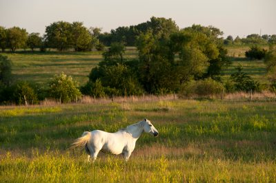 Photo: A horse at sunset near Denton, Nebraska.