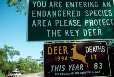 Photo: A road sign details the plight of the endangered Florida Key Deer on Big Pine Key, Florida.