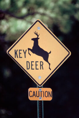 Photo: A road sign warns motorists to look out for the endangered Florida Key deer.