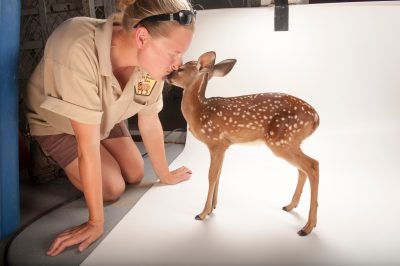 Photo: A three-week-old white-tailed deer fawn and zookeeper at the Gladys Porter Zoo.
