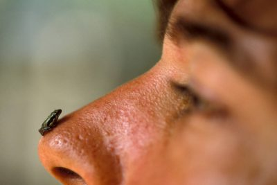 Photo: A frog perched on a man's nose in Brazil's Pantanal Region.