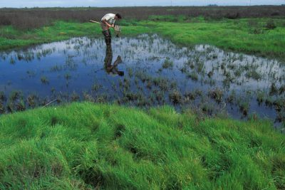 Photo: A biologist searches a vernal pool at Kesterson NWR for the endangered tadpole shrimp.