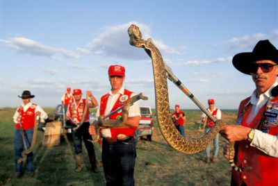 Photo: Handlers hold up a western diamondback rattlesnake at a derby in Mangum, Oklahoma.