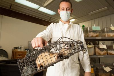 A zookeeper holds a black-footed ferret (Mustela nigripes) at the Cheyenne Mountain Zoo. (Endangered (IUCN) and federally endangered)