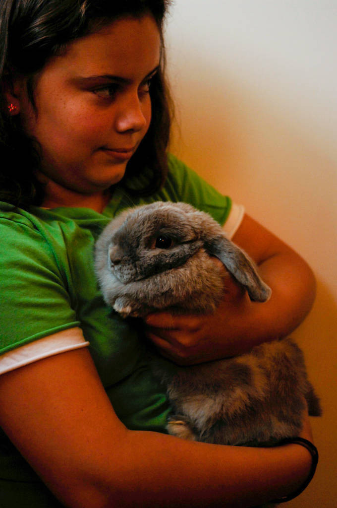 Photo: A young girl holds a large rabbit named Buttons.