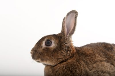 Photo: A dwarf rabbit from the Gladys Porter Zoo in Brownsville, Texas.