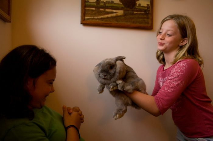Photo: Two young girls hold a large rabbit named Buttons.