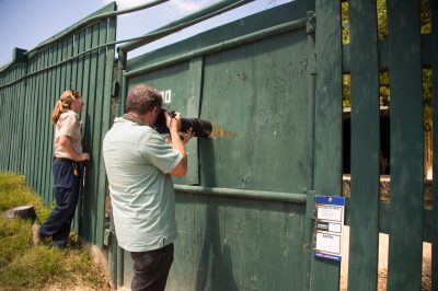 Photo: Photographing a male Lelwel hartebeest (Alcelaphus buselaphus lelwel) at the San Antonio Zoo.