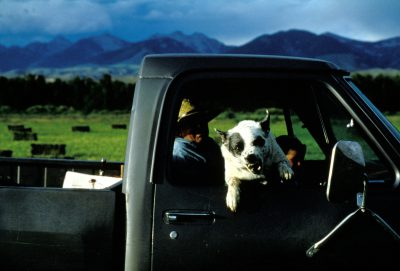 Photo: A dog lunges at the photographer in Salmon, Idaho.
