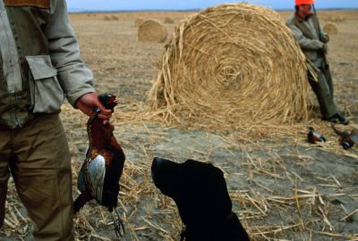 """Photo: Two hunters and their black lab relax after Broken Bow, Nebraska's """"One Box Pheasant Hunt."""""""
