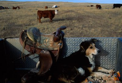 Photo: The warmth of a pickup truck bed suits a cattle dog just fine out on the range of the Charles M. Russell National Wildlife Refuge (Montana.)
