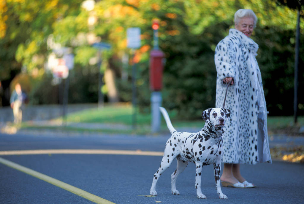 Photo: Hedda Rev-Curry, a doctor and small business owner in Boston walks her Dalmatian wearing a faux Dalmatian coat.