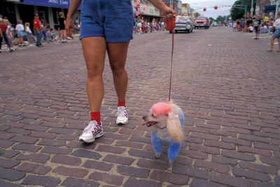 Photo: Red, white, and poodle -- even the pets are patriotic in Seward, Nebraska's 4th of July parade.