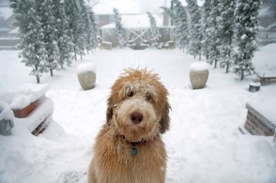 Photo: A dog plays outside after a snowstorm in Lincoln, Nebraska.