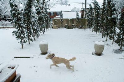 Photo: A dog plays outside on a snowy day in Lincoln.