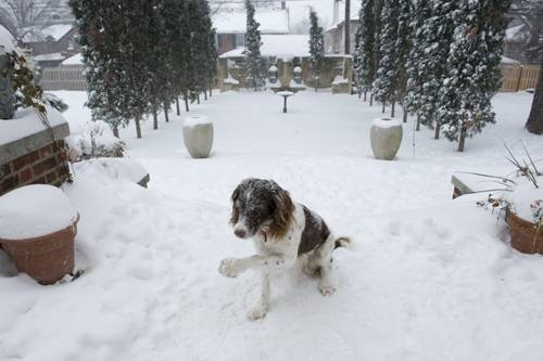 Photo: A dog sits outside after a large snow storm in Lincoln, Nebraska.