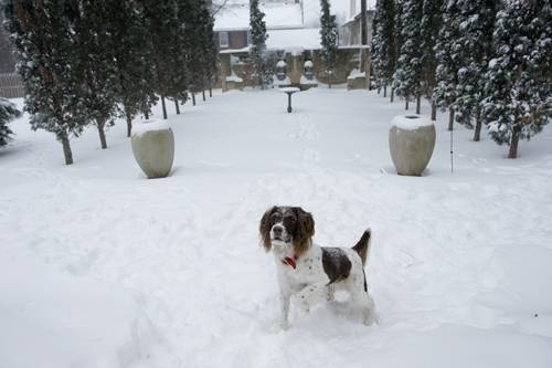 Photo: A dog stands outside after a large snow storm in Lincoln, Nebraska.