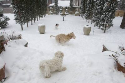 Photo: A group of dogs stand outside after a large snow storm in Lincoln, Nebraska.