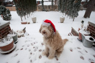 Photo: Muldoon the dog wears a stocking cap outside his home in Lincoln, Nebraska.