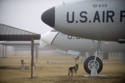 Photo: Dogs awaiting training next to training aircraft fuselages as part of the Military Working Dog (MWD) unit of Lackland Air Force Base in San Antonio.
