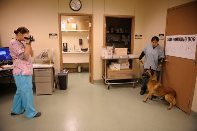 Photo: A specialist documents a working dog at the world-class veterinary clinic for the Military Working Dog (MWD) unit of Lackland Air Force Base in San Antonio.