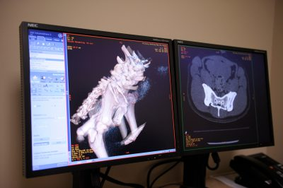 Photo: A CT scan of a dog showing the an animal's bone structure at the Military Working Dog (MWD) unit of Lackland Air Force Base in San Antonio.