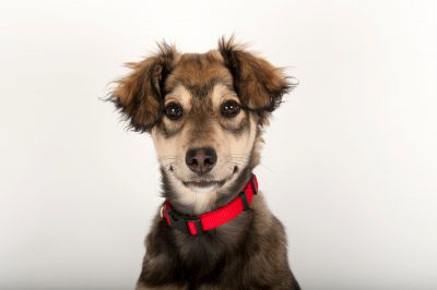 Photo: A husky-mix puppy at the Capital Humane Society in Lincoln.